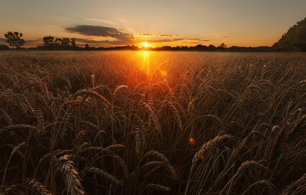 В Волгоградской области собрано 4,5 миллиона тонн зерна