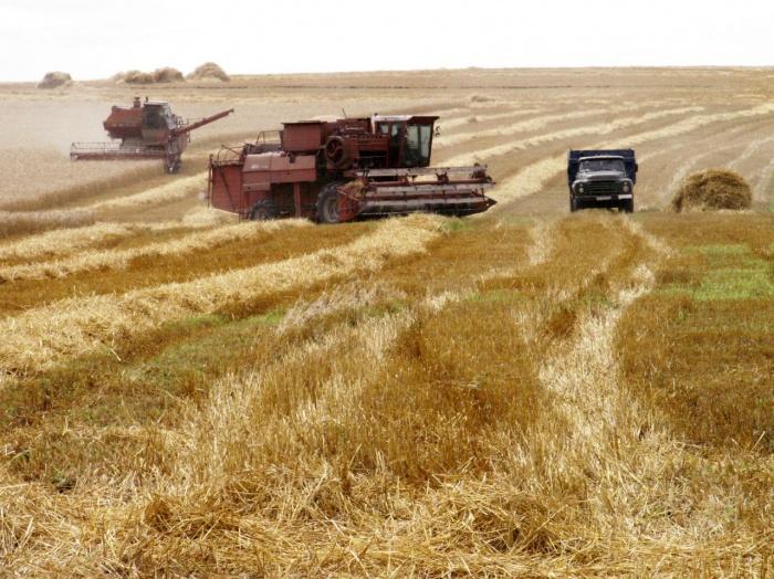 В Волгоградской области собрано пять миллионов тонн зерна