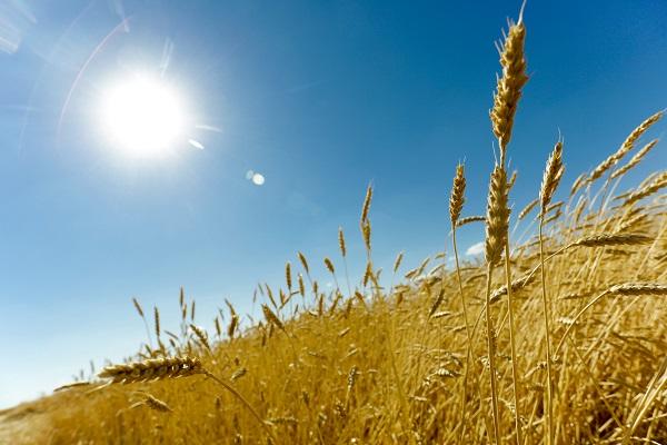 Волгоградская ассоциация крестьянско-фермерских хозяйств признана лучшей в стране