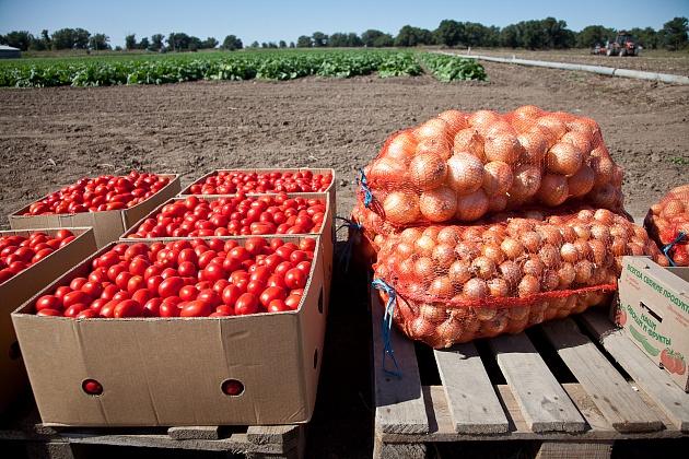 Волгоградские аграрии собрали уже более 650 тысяч тонн овощей и бахчевых